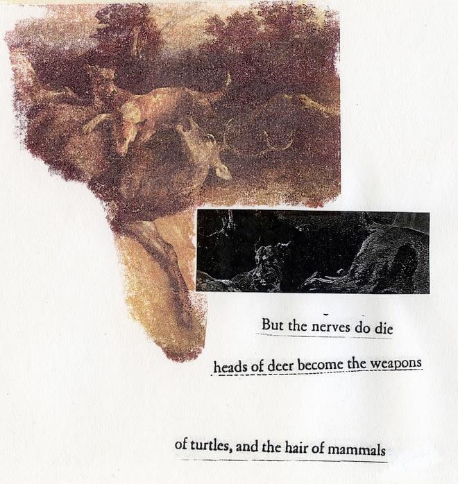 The Hair of Mammals